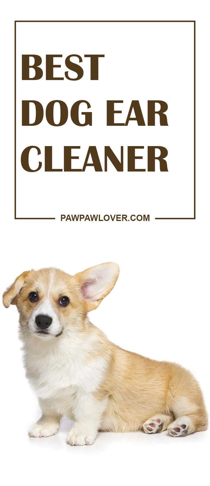 Best Dog Ear Cleaner Review 2020 5 Natural Options For