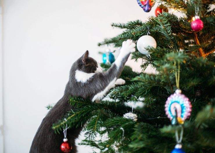 Cat & Christmas Tree