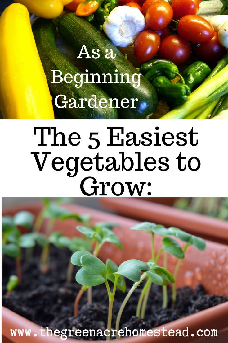 The 5 Easiest Vegetables To Grow As A Beginning Gardener 400 x 300