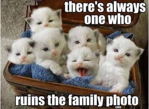 Bildergebnis für there are always one who ruined the family picture pics with cats