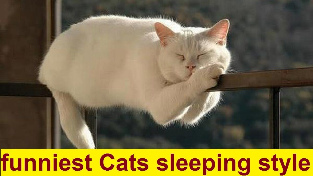 Top 10 Funniest Cats Sleeping Style Funny Cats Sleeping In Weird