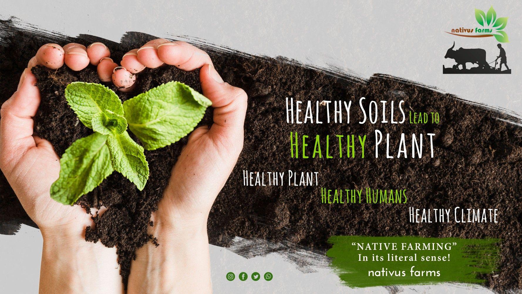 - Healthy Plants - Healthy Humans - Healthy Climate #nativusfarms #soils #soil #soilscience #agriculture #soilhealth #healthysoil #farming #livingsoil #land #planting #fertilizer #farmland #soilbiology #ground #stopsoilpollution #nature