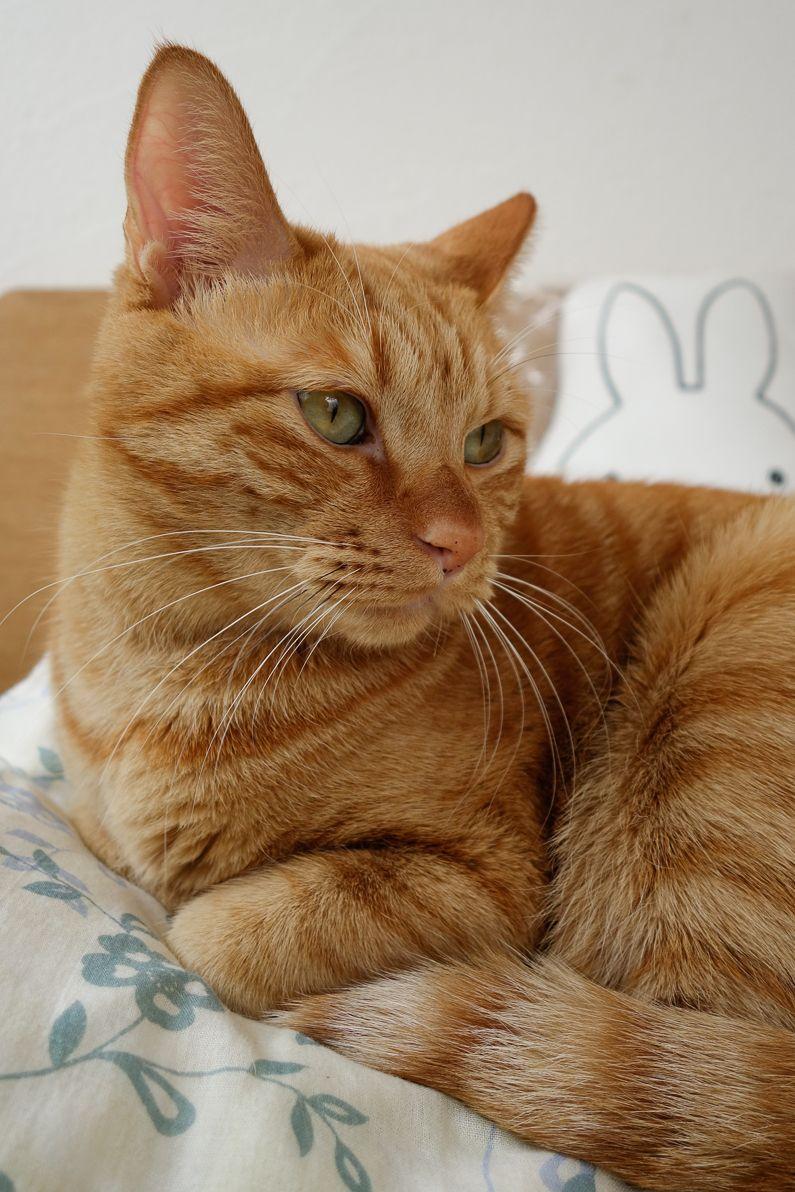 ぼくわちくわ Cattastic Cute cats, dogs, Orange tabby cats