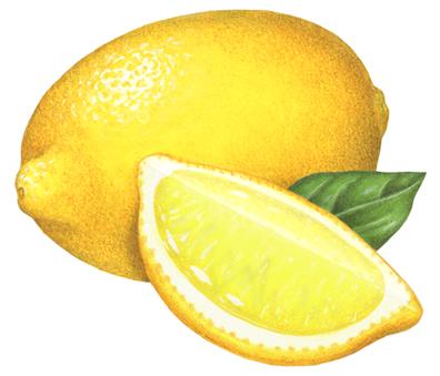 Lemon Png Vector Lemon Transparent Png Image Lemon Clipart Fruit Photography Lemon Clipart Fruit Cartoon