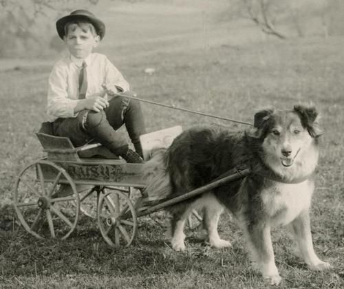 Antique Real Photo Postcard Young Boy Hat Tie in Daisy Cart Wagon Pulled by Dog
