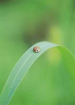 how to get rid of orange ladybugs