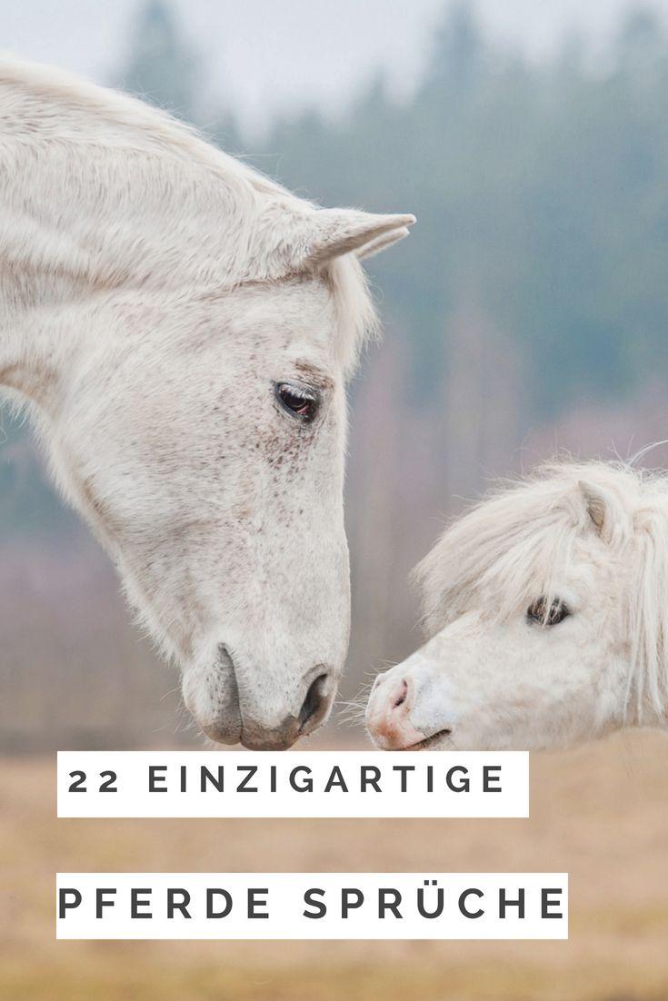 22 Einzigartige Pferde Sprüche Liebe Zitate Pferd Pony