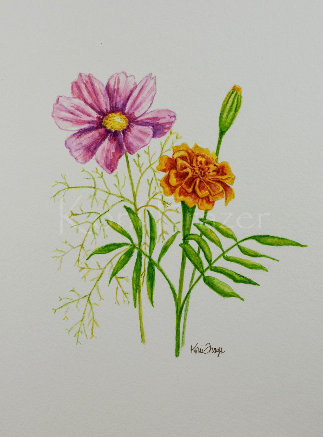 Cosmos and marigold October birthday flower original watercolor painting b