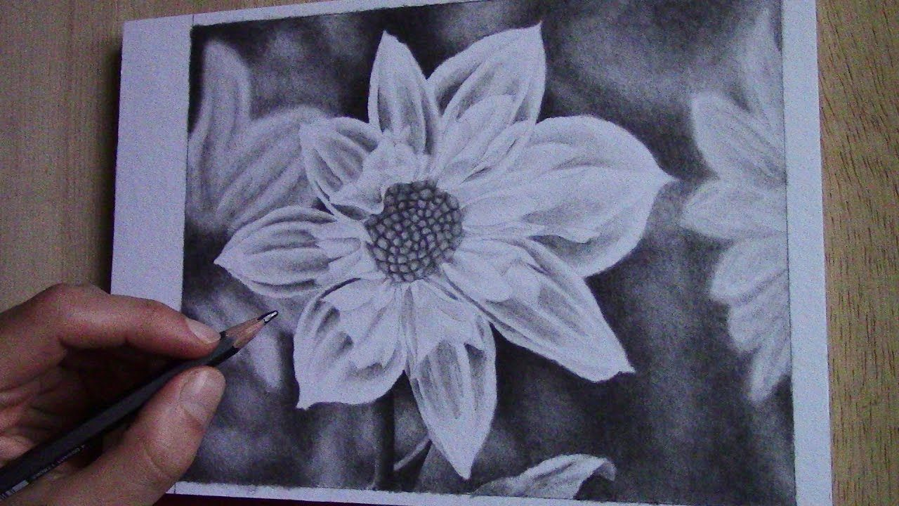Drawing a dahlia blossom with only one water soluble graphite pencil