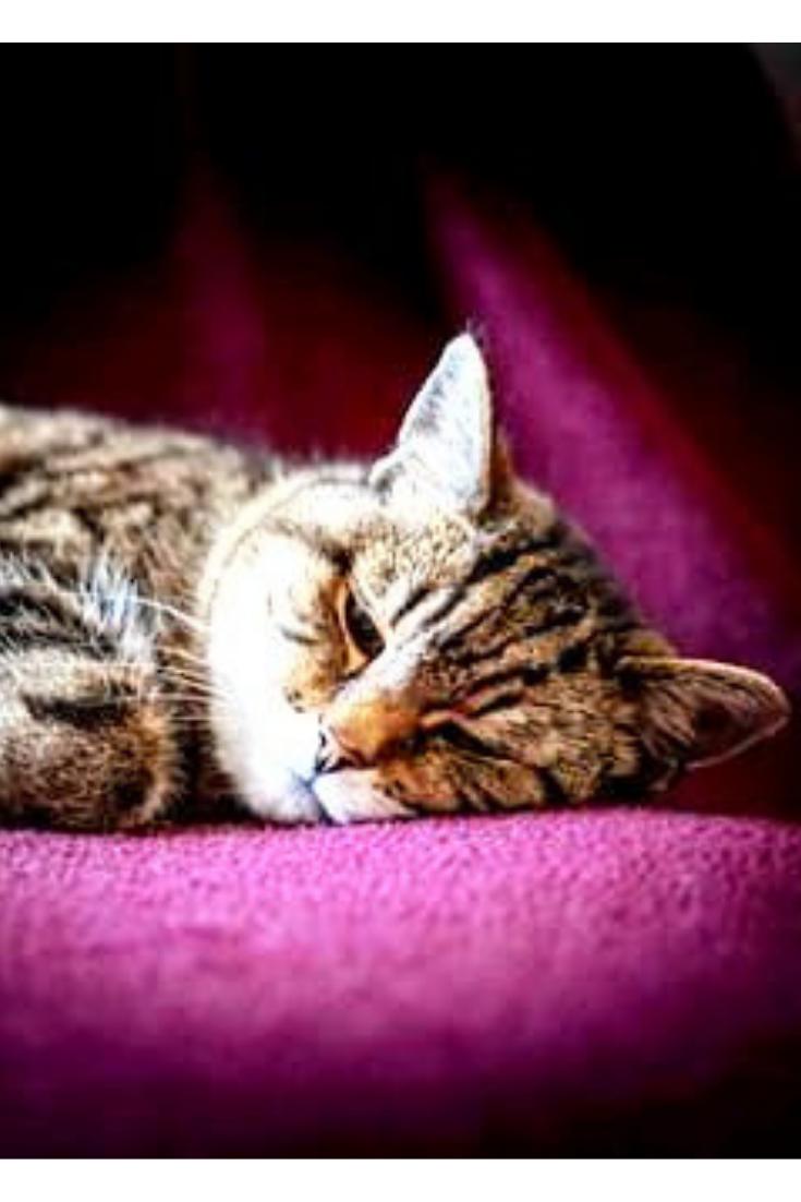 Cat Sleep Crazy Cats Cats Cat Sleeping
