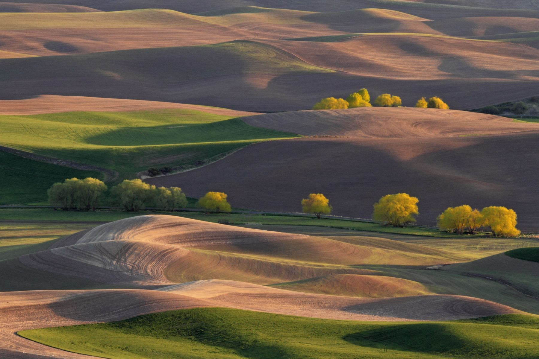 Just another beautiful afternoon view from  Steptoe Butte. © 2015 Pat Schilling