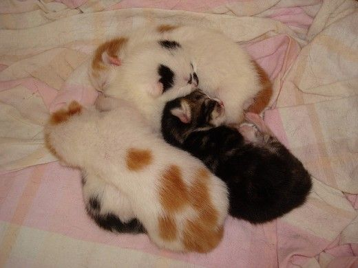How To Take Care Of Newborn Kittens Week By Week Newborn Kittens Kitten Care Pregnant Cat