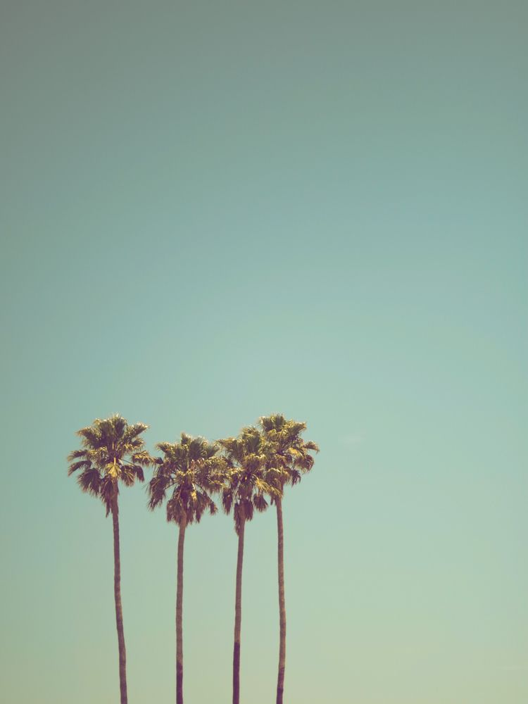 3 California Palm Trees Against Pastel Teal Sky Minimalist Landscape Photography Mini Art Prin In 2020 Palm Trees Wallpaper Tree Wallpaper Iphone Palm Tree Photography