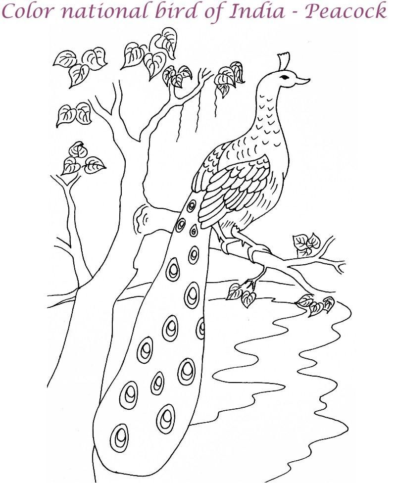 Beautiful Peacock Bird Coloring Pages