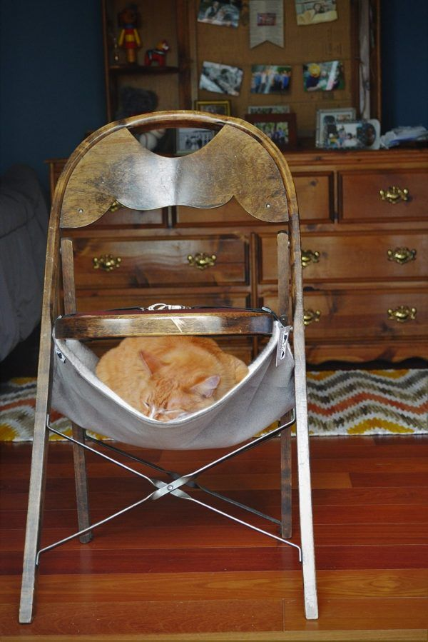 Need to bring some style and functionality to the life of your cat ...