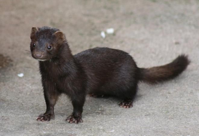 El Tribunal Supremo ha estimado parcialmente un recurso de Ecologistas en Acción y ha ampliado el Catálogo Español de Especies Exóticas Invasoras, incluyendo entre otras especies a