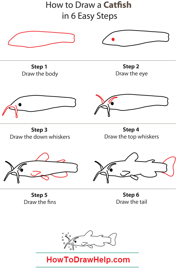 How To Draw A Catfish Step By Step How To Draw Drawings