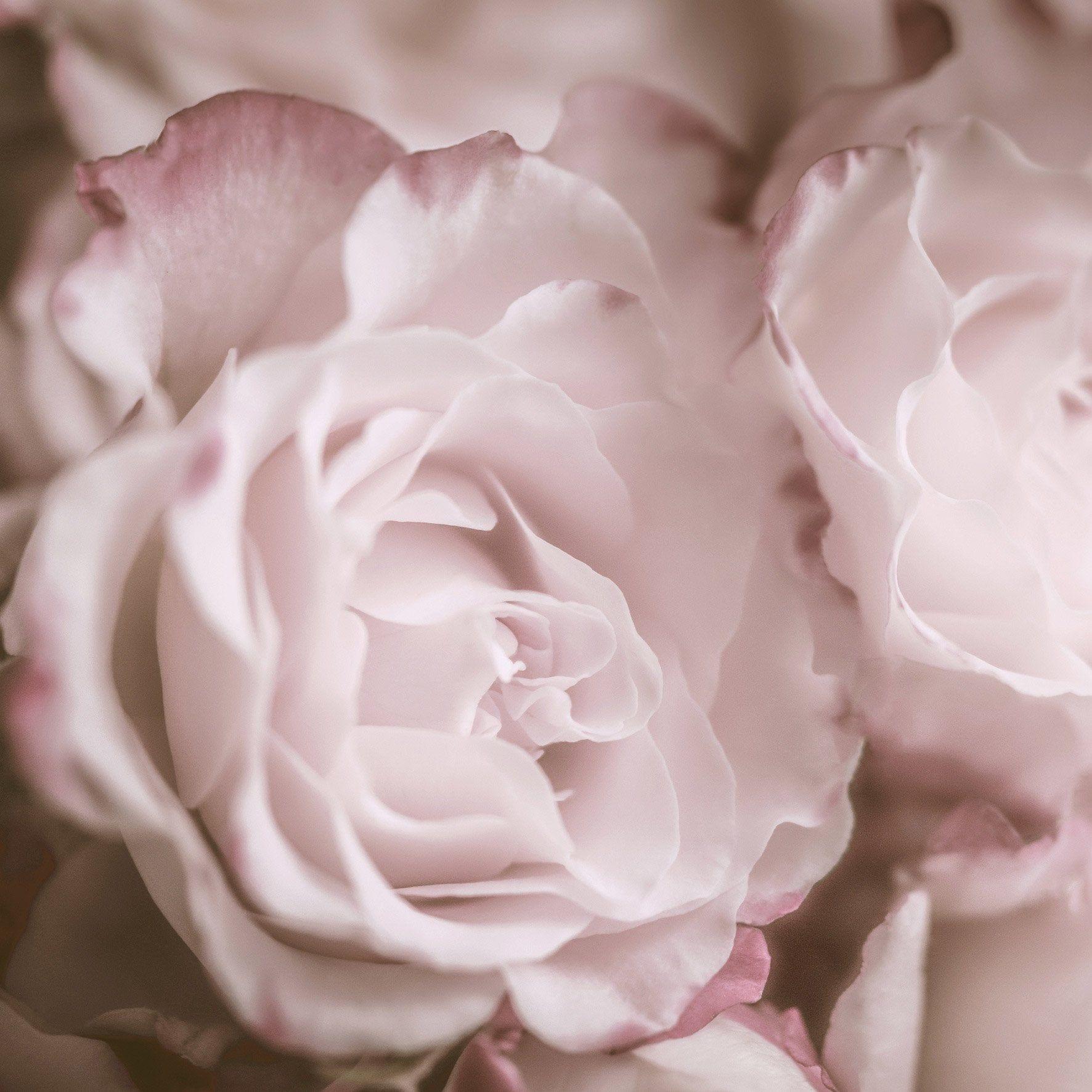 Toile Imprimee Rose Blanche Multicolore Artis L 45 X H 45 Cm