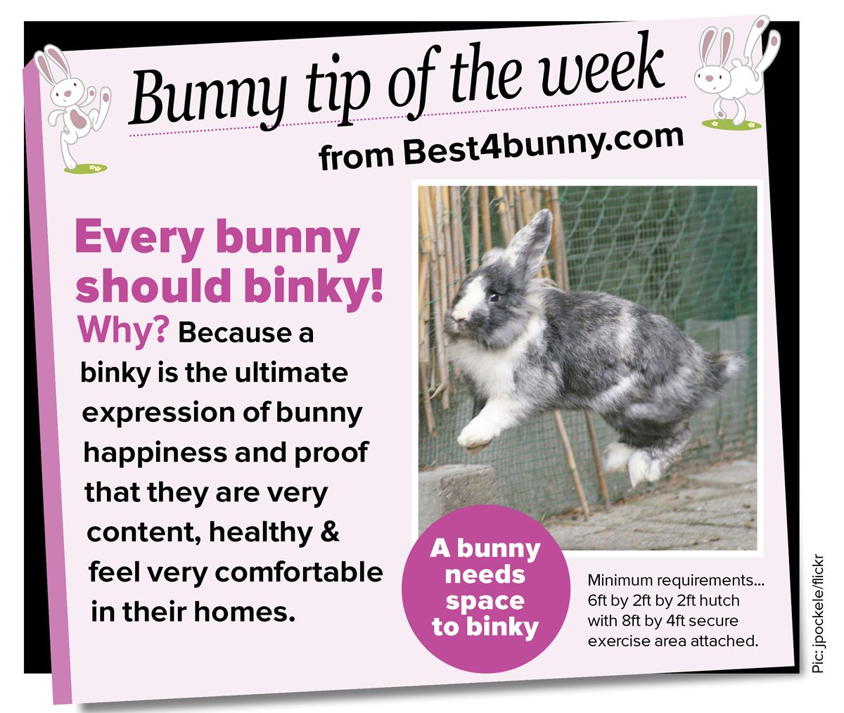 Every Bunny Should Binky Sounds A Lot Less Negative Than You Re Doing X Y And Z Wrong A Nice Tagline For A Rabbit Welf With Images Bunny Mom Pet Rabbit
