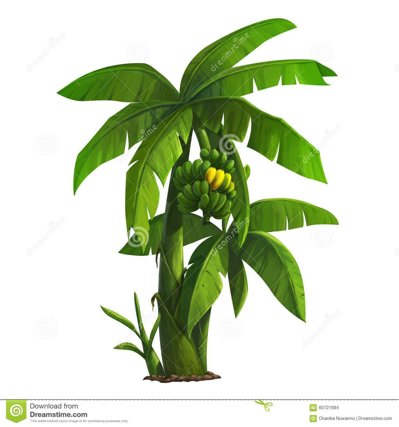 Banana Tree Stock Illustration Illustration Of Banana 60721684 Tree Illustration Banana Tree Plant Drawing