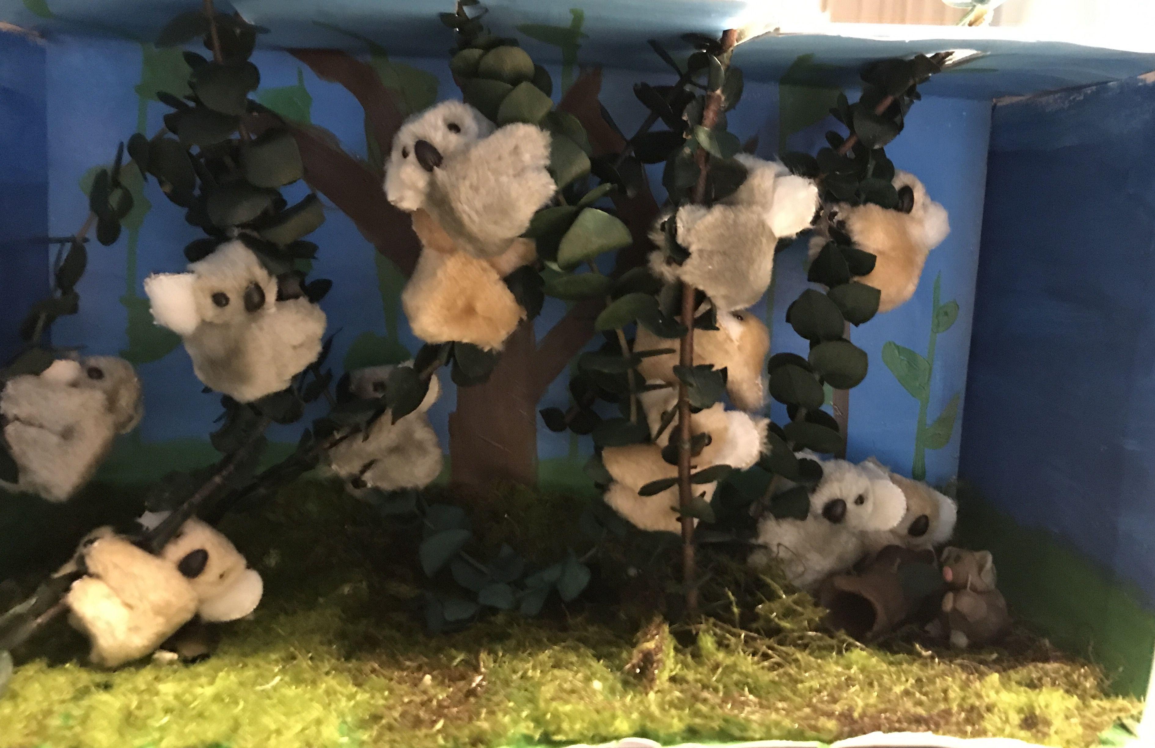 Grade 5 Diorama Koala Habitat Painted Construction Paper