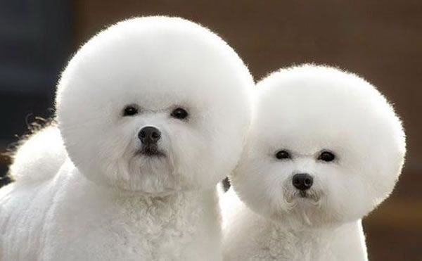 21 Cutest Fluffy Pets Need Some Serious Pet Grooming Shared Via Slingpic