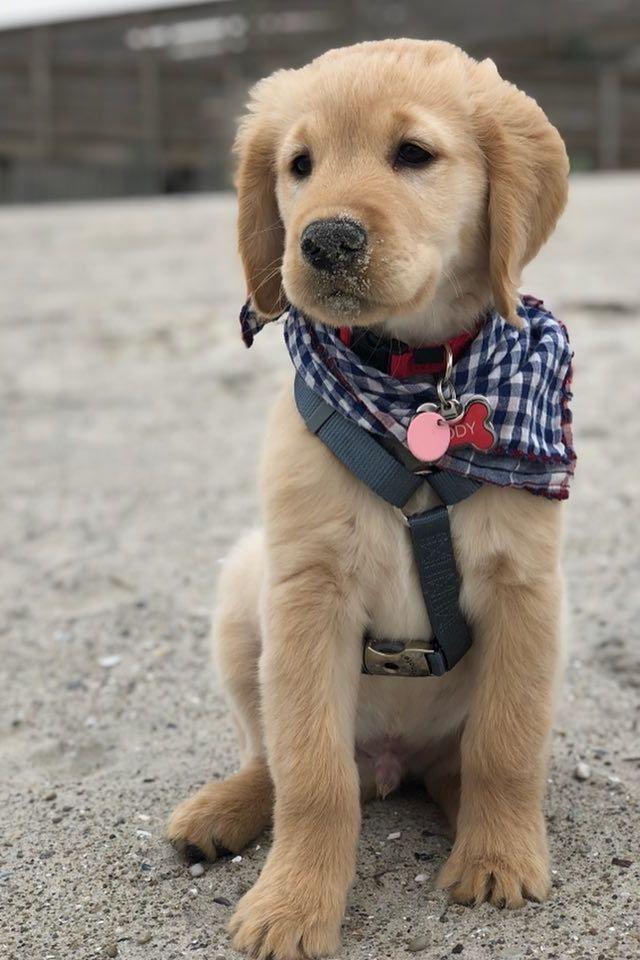 Dogs Qld Dogeyes Dogcartoon Doggroomingtable Dog Breed To