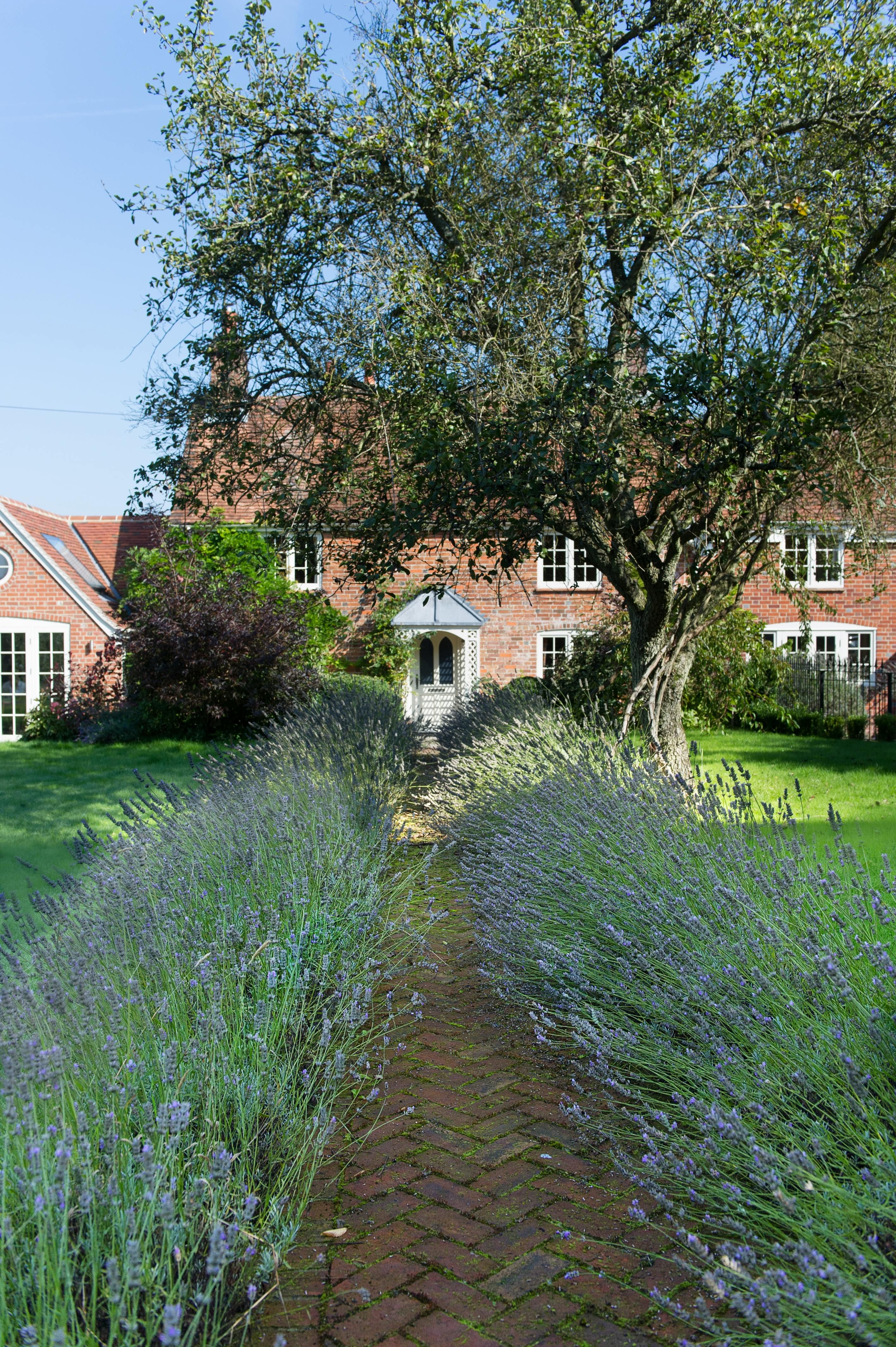 Country House Extension With Lavender Lined Brick Path Designed By Absolute Architecture Http Www Absolut English Garden Design English Garden Garden Design
