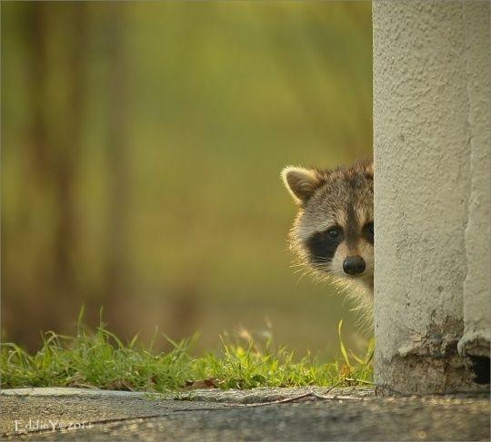 (Really) Cute Animals