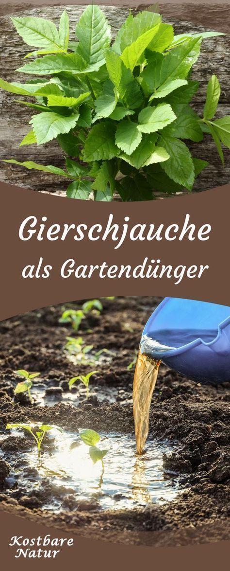 Photo of Giersch zu wertvollem Dünger verarbeiten