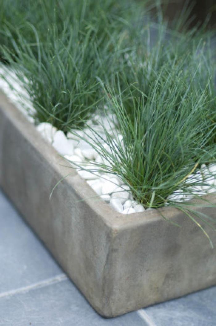 top 10 des plantes pour jardini res d 39 hiver jardin hiver femmes d 39 aujourd 39 hui jardin. Black Bedroom Furniture Sets. Home Design Ideas