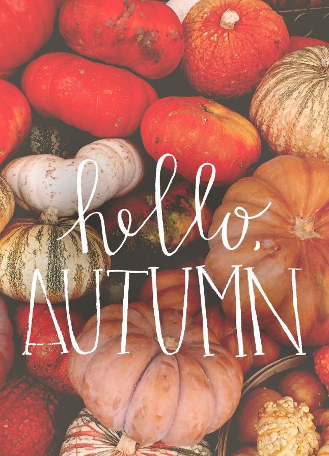 I Love Fall Like For Real It Is Hands Down My Favorite Time Of The Year