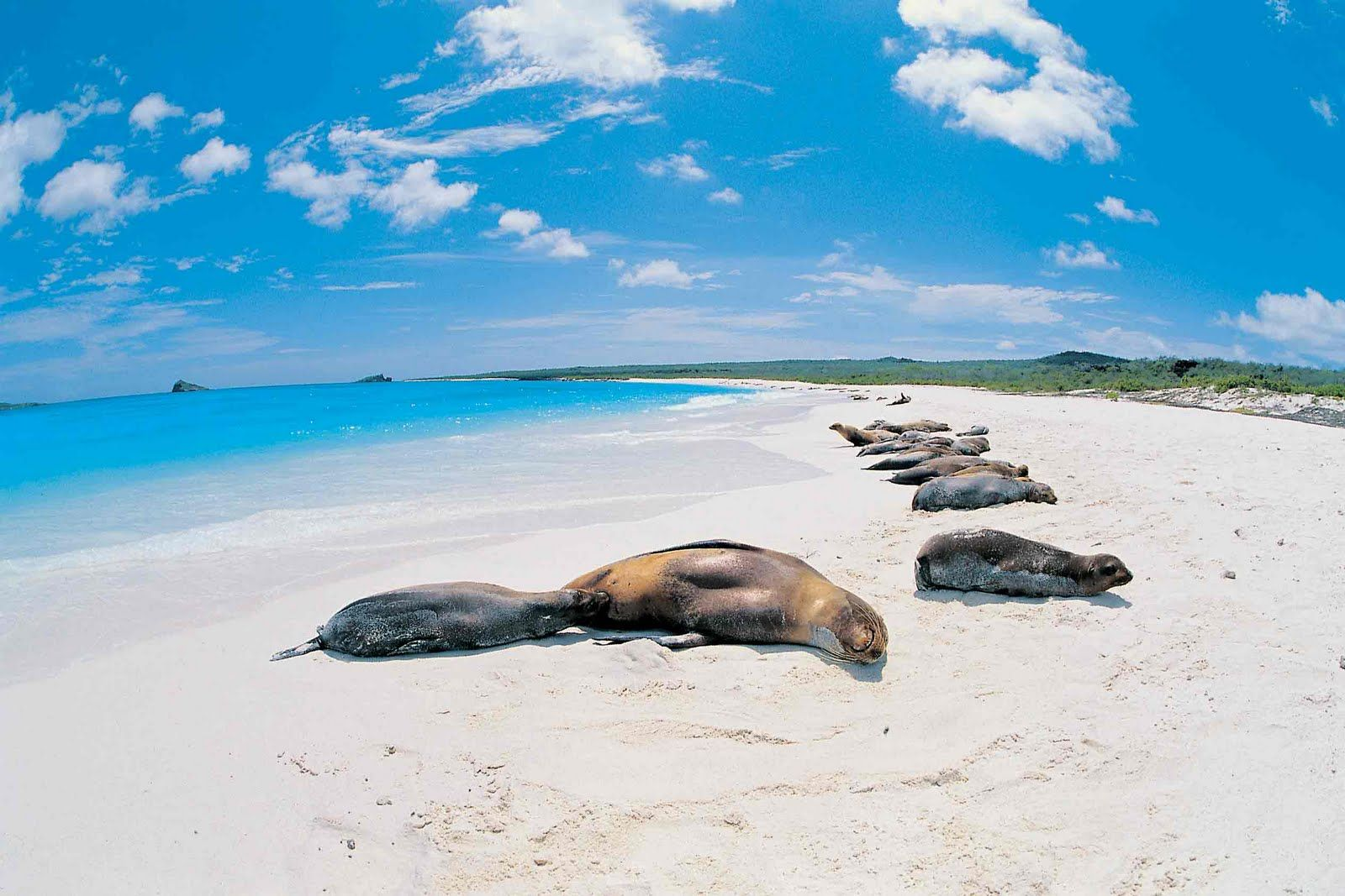 """Galápagos Islands - """"Nothing will prepare you for what the Galapagos Islands have to offer"""", says the ad, and it couldn't be more true..."""