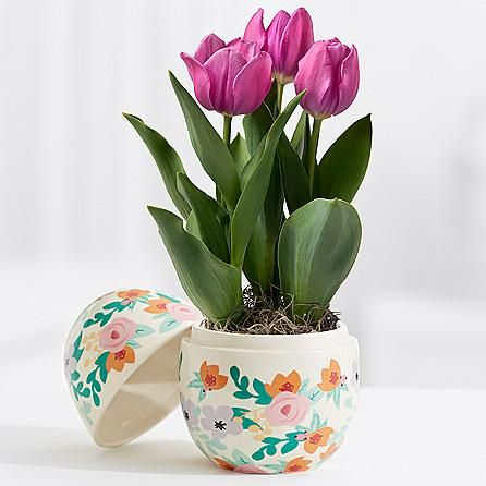 Easter brunch tulips brunch easter and send flowers easter brunch tulips negle Choice Image