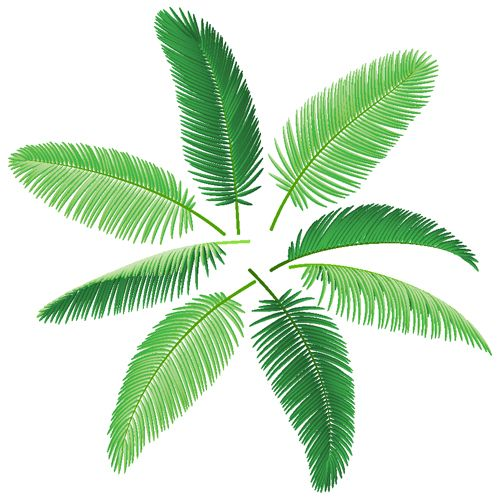 Set Of Green Palm Leaves Vector 05 Palm Tree Vector Leaves