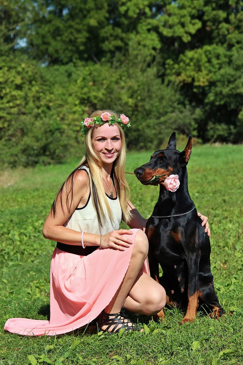 Doberman Training Train Your Dog For Obedience With Images