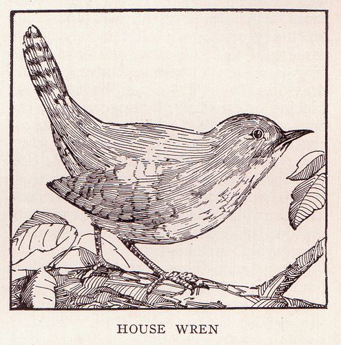Wren Page 3167 Bird Coloring Pages Illustration Art