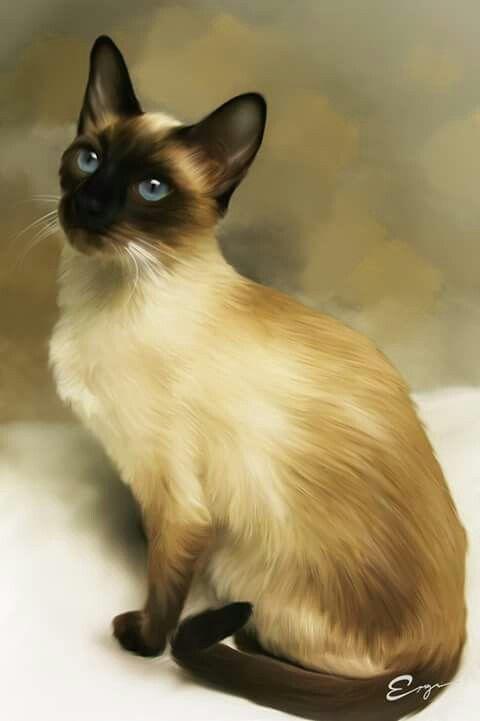Siamese art Siamese cats, Cats, kittens, Oriental cat