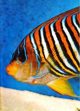 Amsterdam Book Auctions Lot #: 518 [Biology] Aquarium Fishes [Total 5] ca. 1980 Groot Aquarium boek The Wondrous world of fishes De Vissen van Nederland Aquarium Vissen Encyclopaedie 500 aquariumvissen in kleuren