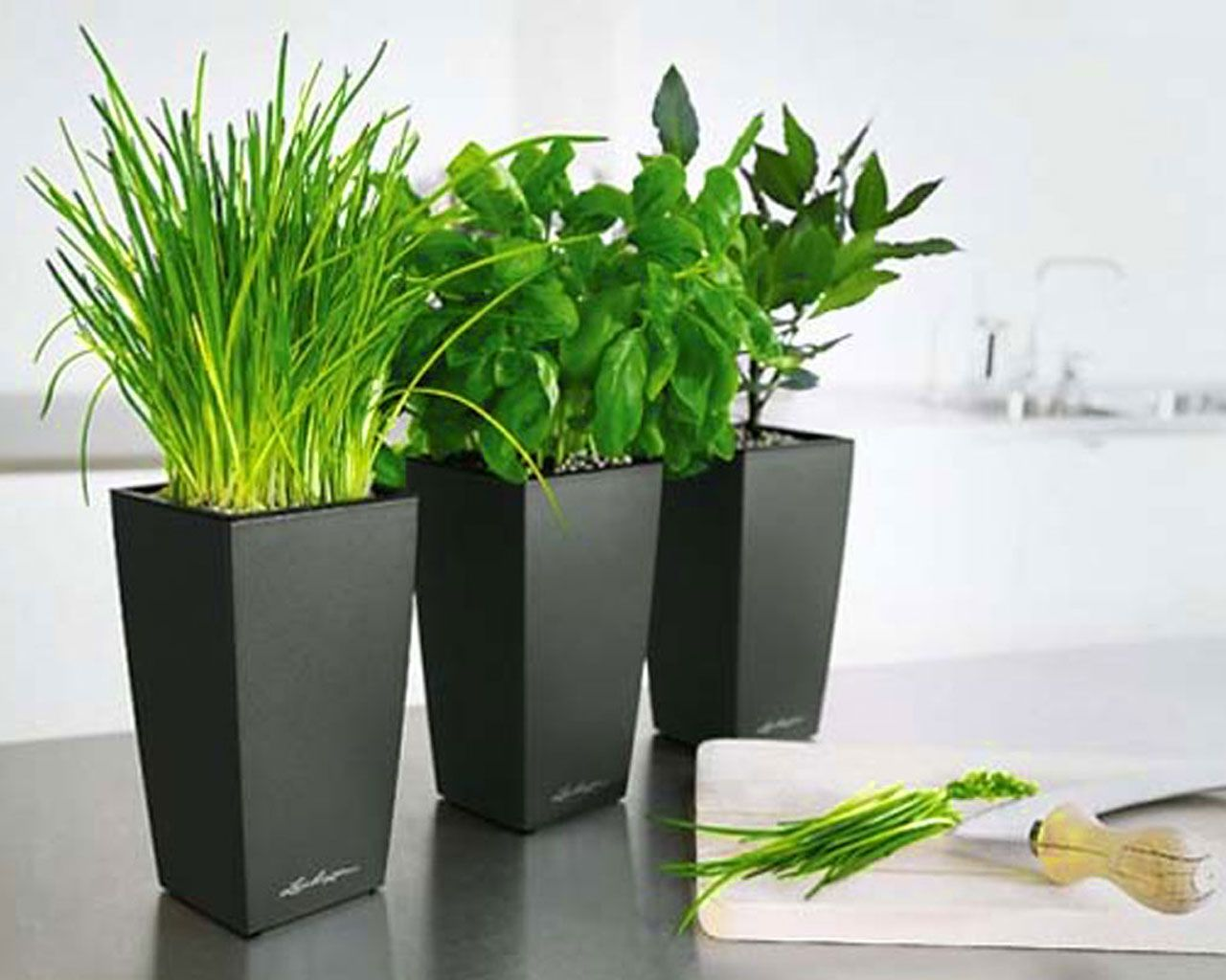 Pot bunga minimalis google search pots pinterest for Modern indoor plants