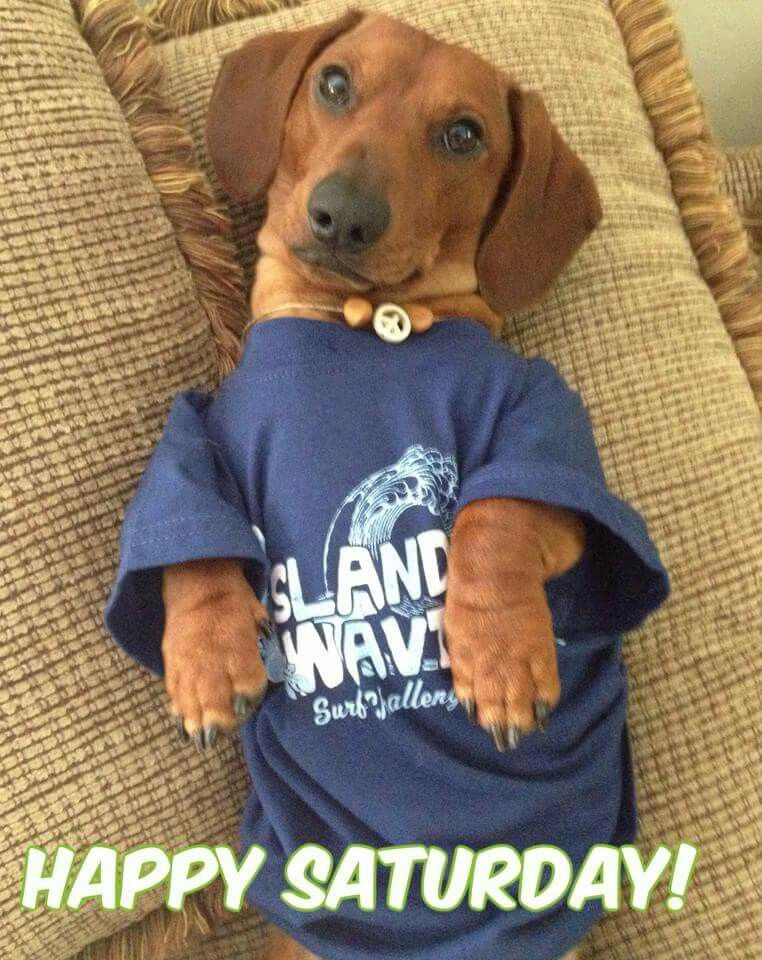 Happy Saturday Baby Dachshund Dogs And Kids Dachshund Love
