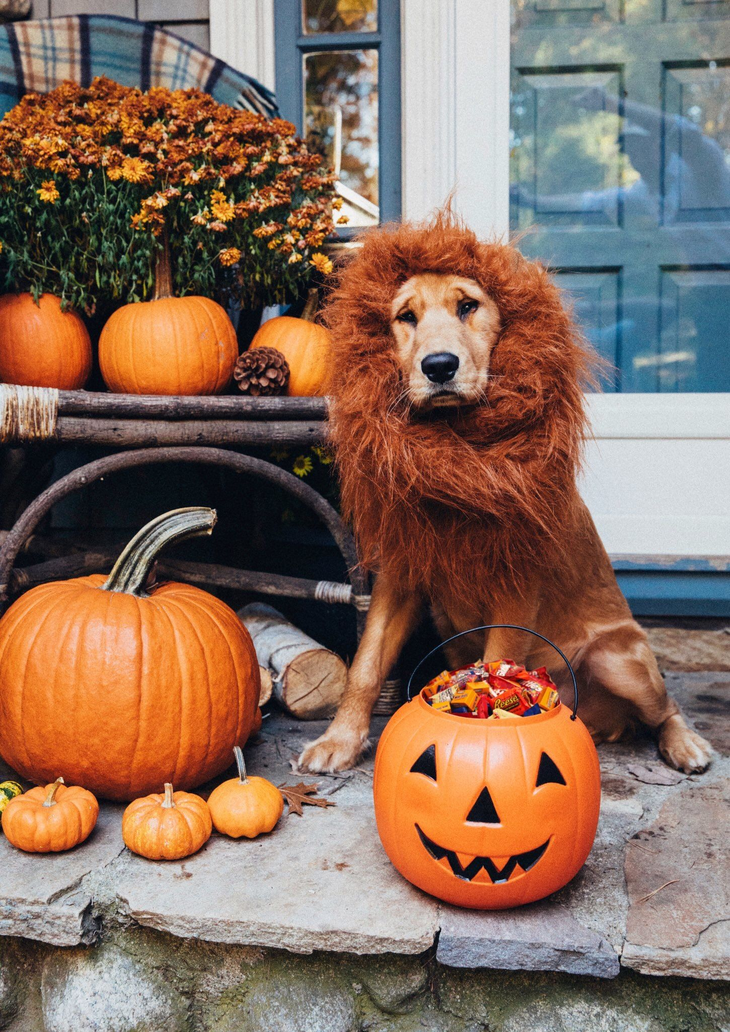 Halloween image by RichmondMom Halloween puppy, Puppy