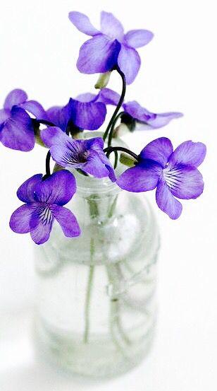 Épinglé par Marie-Claire G sur fleurs de nôtre monde | Fleur ...