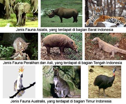63+ Gambar Fauna Asli Indonesia HD Terbaik