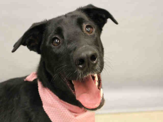 Adopt A Pet In Colorado Springs Humane Society Of The Pikes Peak Region Pets Adoption Humane Society