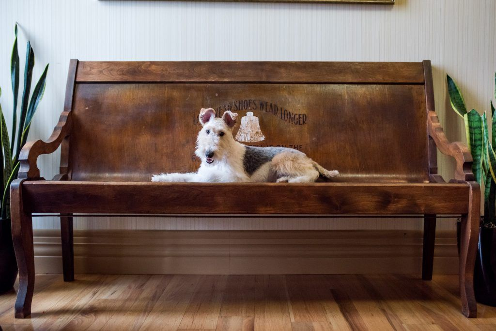 9 Of Virginia S Most Pet Friendly Hotels In 2020 Pet Friendly Hotels Pets Pet Friendly