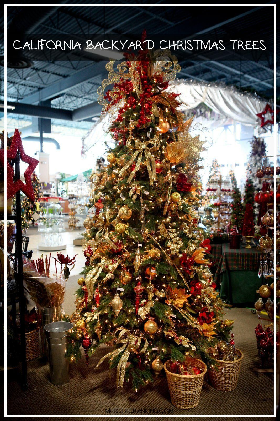 California Backyard Christmas Trees 2021 di 2020