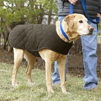Just found this Quilted Dog Jacket - Quilted Waxed-Cotton