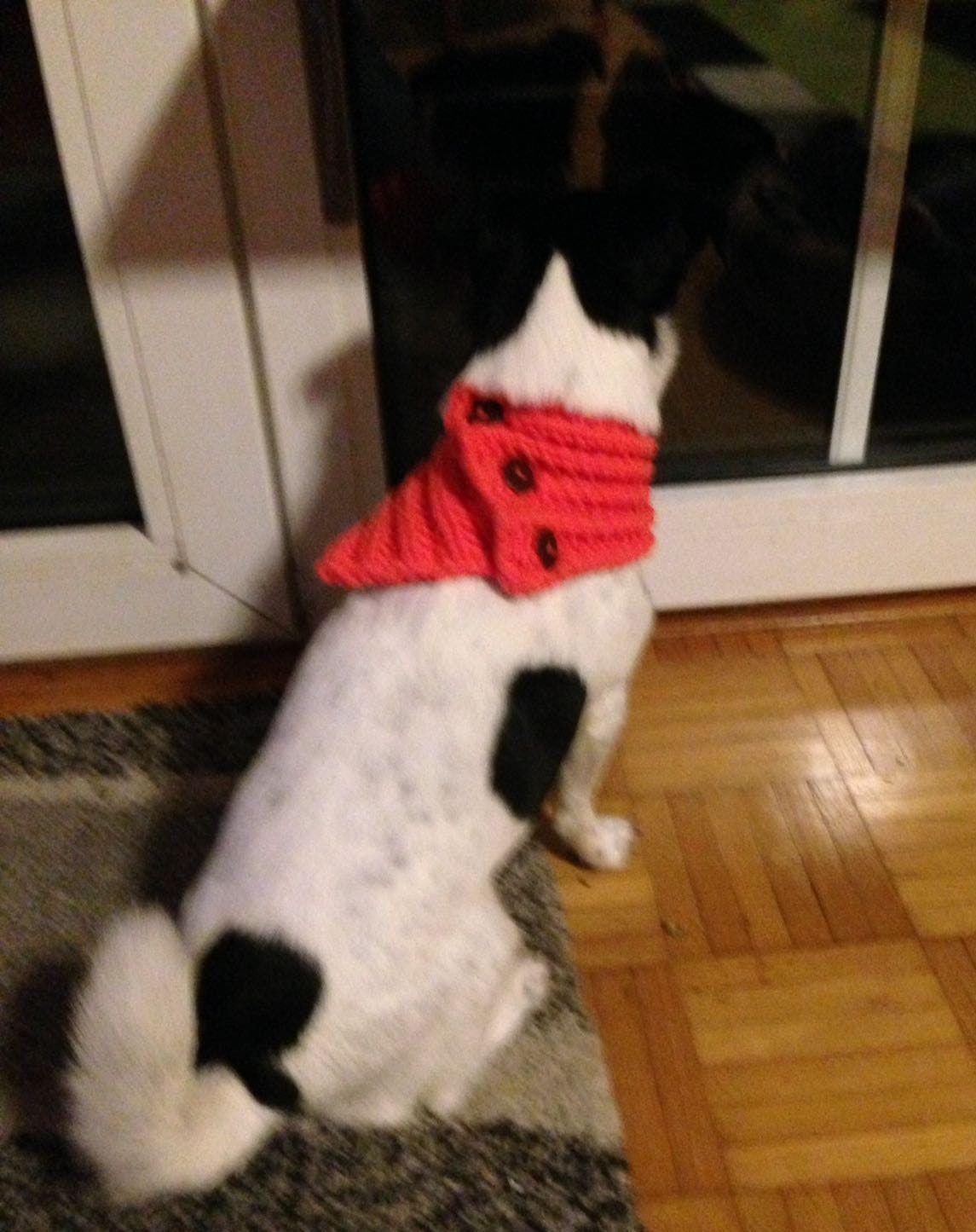 Corinnas Hundeschal, ein schöner Rücken... | Corinna WollBloggt ...