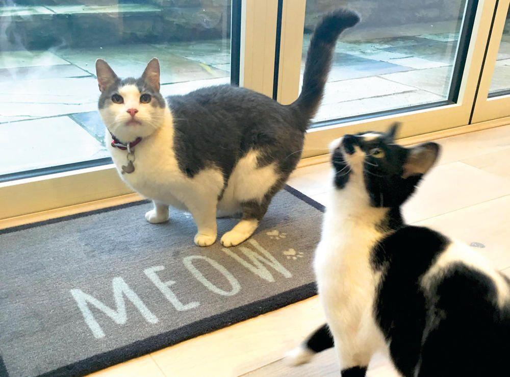Howler \u0026 scratch meow lt grey cat / door mat / food tidy / barrier mat / runner & Howler \u0026 scratch meow lt grey cat / door mat / food tidy / barrier ...